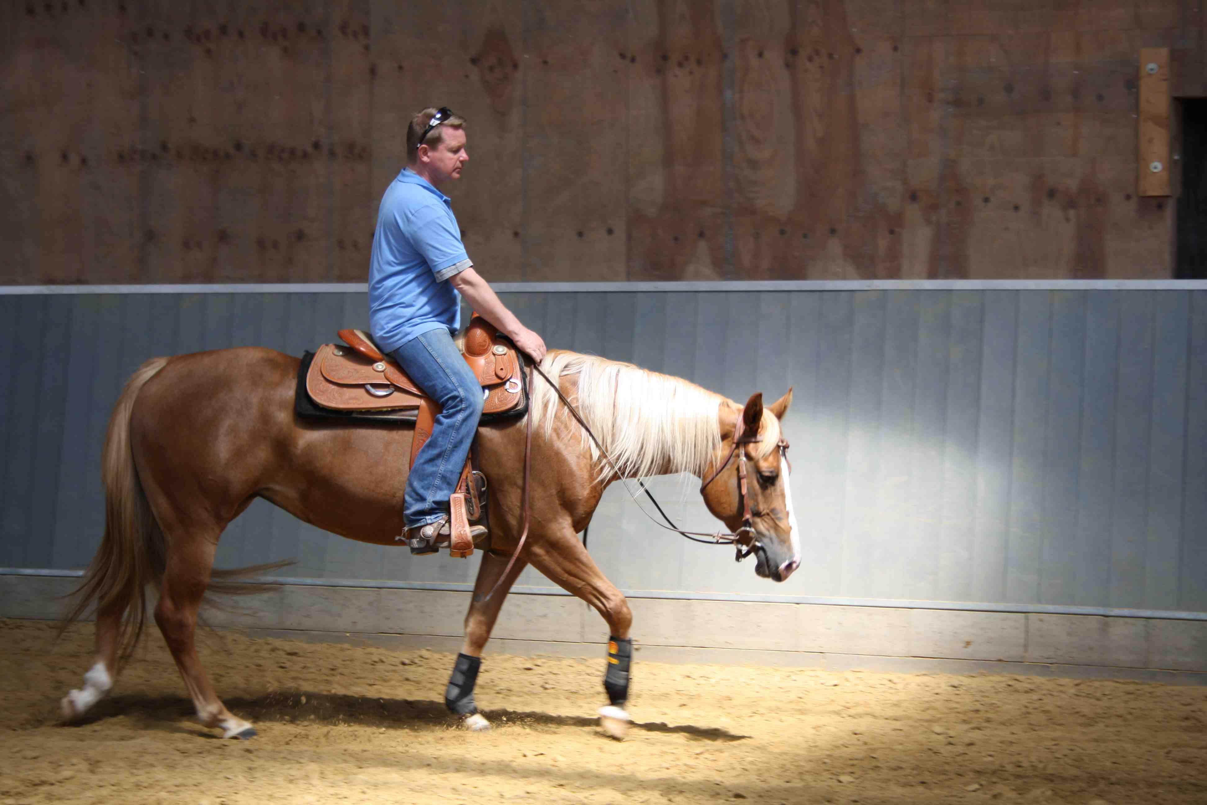 horsefeelings.de: Pfer...